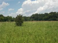Gorgeous 9.1 acres of good land inside the Lafourche