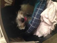 I have a very cute puppy whom is a male he has been de