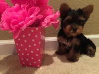 I have an adorable purebred female yorkie puppy