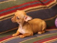 I have 3 adorable little Chihuahua's. 2 females and 1
