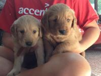 We have adorable AKC puppies available. They will be
