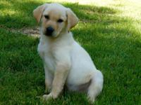 . Navy is the puppy that you have actually been trying