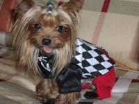 I'm selling a male teacup Yorkshire Terrier weighing