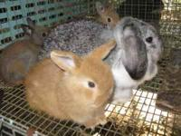 We have a nice selection of bunnies different breeds