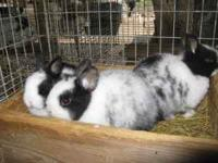 We have many different cute bunnies for sale. They