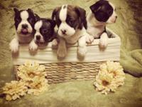 We have four Angels that will be ready for adoption