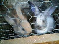 We have the most adorable bunnies for sale. Various