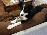 5 month old Border Collie. We have had her for 21/2