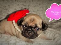 I have 2 Well Loved female, fawn baby pugs; they are 3