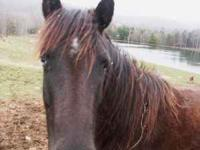 Cute 12 hand pony mare for sale. She in her teens. She