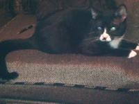 * 1 year old * Litter-trained I am located near Humble,