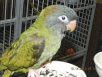We have 2 very cute little baby Parrotlets for sale.