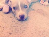 I have a blue nose baby pitbull she is 2 months she