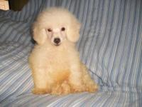I HAVE A 16 WEEK OLD FEMALE POODLE SHE WILL BE ABT 5