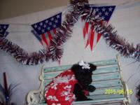 Dolly is a gorgeous little yorkie-poo. She is from a