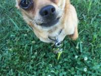 I have a male chihuahua hes super cute!and loves to