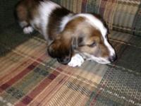 These puppies are looking for a great home. We have a