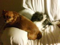 Two very cute female dogs need a new home. The brown