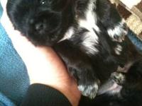 I have a adorable almost 3 week old mal/shih female