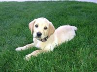 I have one male purebred puppy looking for a new home.