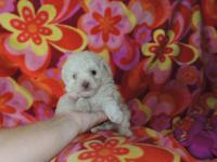 Hello. I have puppies mini toy poodle ready for a new
