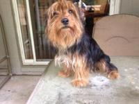 Sparkie is 8 month aged cute little pet dog elevated in