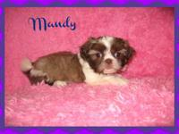 Come meet our adorable Morkie Twinkle.she loves to sit