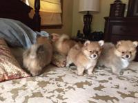 I have 5 beautiful puppies to be part a new member of a