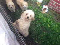 These cute puppies belonged to my sister but she is