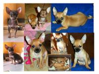 Very Playful And Cute Pups 4 Months Old 2 Female