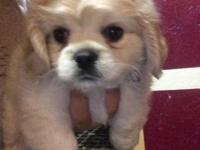 I have a beautiful 7 wk old puppy fluffy active and