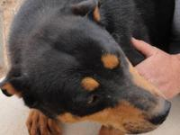 ROTTWEILER puppies will be ready on DEC 20th will meet