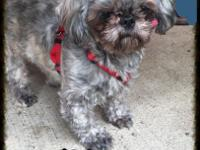 Cute Shih Tzu for sale! He is 15 months old. He is a