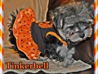 ** ONLY 3 left ** We call them Tinkerbell, Jasmine, and