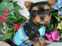 Animal Type: Dogs Breed: yorkies We have male and