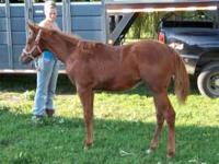 CP Peppermint Patty was foaled 4/2011, Her sire is