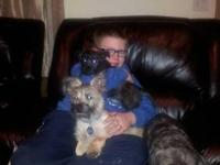 I have two cairn terriers for sale the female is a