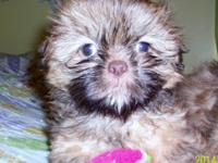I have actually 2 CKC registered Shih-Tzu left. They