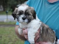 Rosie is 6wks in these images. She is so sweet and