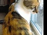 My story Cutie Pie is a shorthaired, calico female