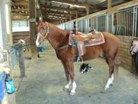PEPPYS ROYAL FLASH IS FOR SALE REGISTERED AQHA 15 YEARS