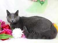 Cyana's story Cyana is a gorgeous 1 year old female