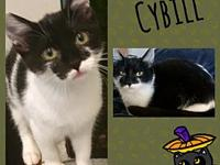 My story Cybill is absolutely adorable. She just turned