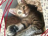 Cypress's story Cypress is a calm, quiet girl. Shes