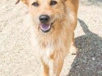 Cyrus's story Cyrus Breed: Terrier mix Other animals: