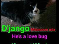 D'jango's story Get ready for the greatest love of your