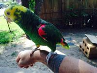 I HAVE PRETTY D. YELLOW HEAD AMAZON PARROT VERY