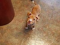 Dabo's story Dabo was born on May 12. He is a sweet and
