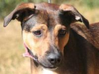 Dachshund - Brody - Small - Young - Male - Dog Little