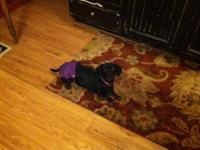 Dachshund - Dakota - Small - Adult - Female - Dog Hi,